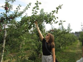 apple pickin